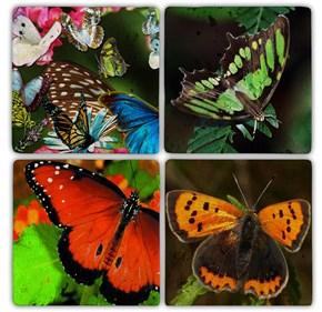 Kelebek Doğal Taş Bardak Altlıkları - BA095 görseli